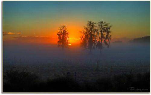 landscapes sunrises hdr professionalphotographer oldflorida baldcypresstrees floridaimages photoworkshops phototours dinnerislandwma wildlifemanagementareas phototourguide jmwnaturesimagescom dynamichdr5 audiovisualphotopresentations