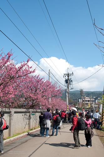 2012 平等里.櫻花