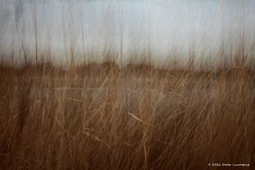 Selsey reed beds II by SimonLawrence