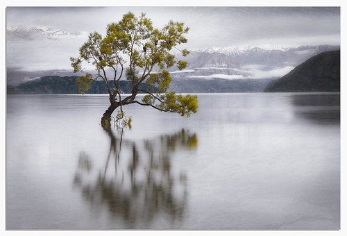 new lake snow mountains tree art texture birds japan sunrise artwork long exposure fine zealand le nz capped wanaka micarttttworldphotographyawards micartttt