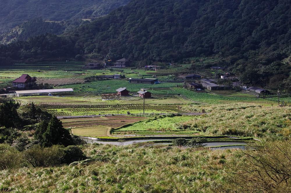草山.山櫻