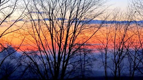 trees fog sunrise north carolina