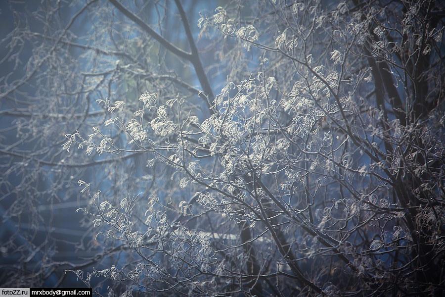 04_trees-[20120203_9703]