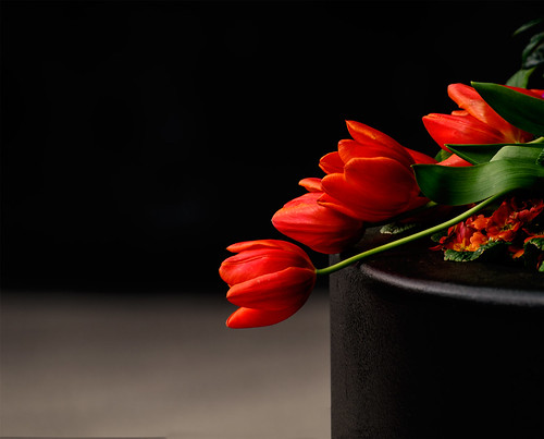 red-tulips-reclining-a-01
