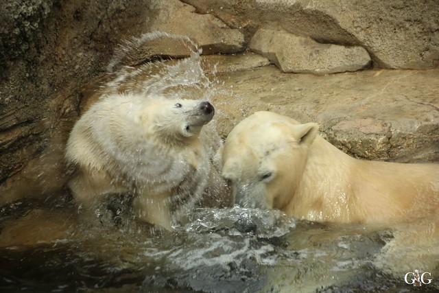 Zoo Am Meer 30.04.201685