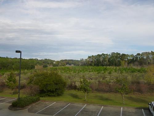hotel view florida gainesville fl bestwestern gatewaygrand