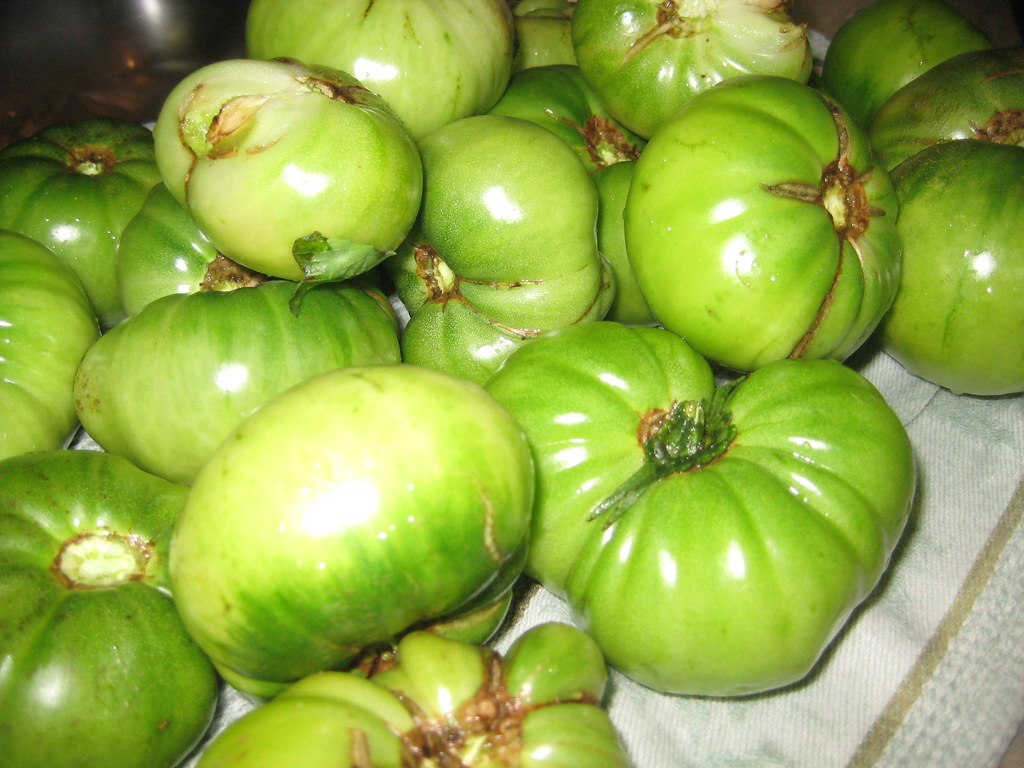 Mincemeat Pie Filling Recipe: Heirloom green tomatoes for my mincemeat!
