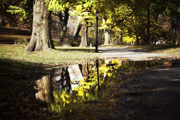 fort-green_brooklyn_autumn_05.jpg_effected