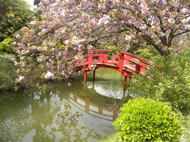 Souvenirs de printemps jardin japonais toulouse france for Jardin japonais toulouse
