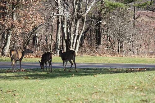 Deer Crew