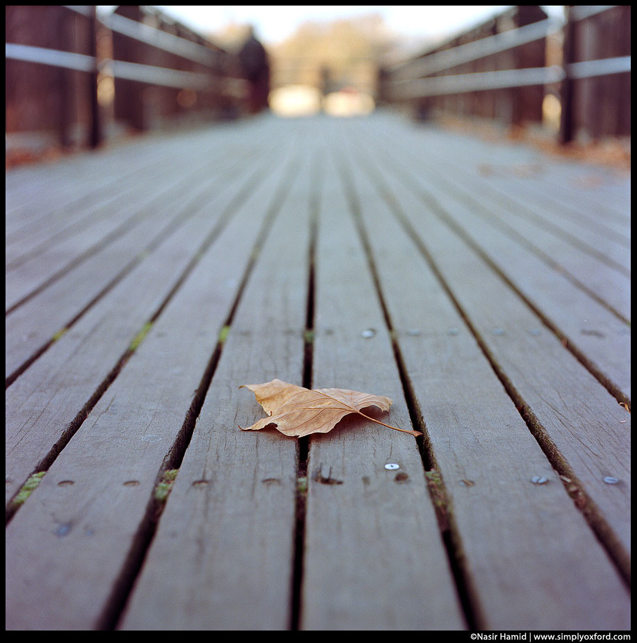 one leaf on decking