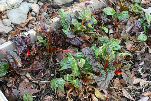 winter gardens 031
