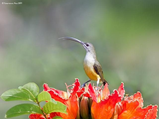 Тропические птицы фото