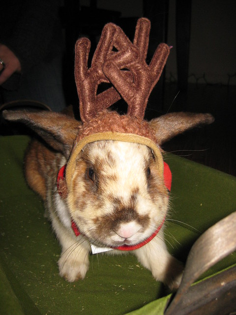 rudolph the red nosed rabbit? Nope, just Lord Picklesmith enjoying a hat