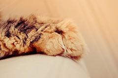 Couper les griffes du chat - A quel age couper les griffes d un chat ...
