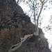 Amate tree - Árbol de amate al lado del Río Colorado entre Yolotepec y Santa Catarina Cuananá (Región Mixteca), Oaxaca, Mexico por Lon&Queta