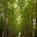 Chenonceau-20110524_9341.jpg