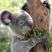 Feathersdale Wildlife Park Austin