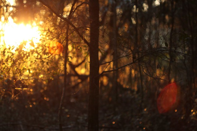sunset through a forest too