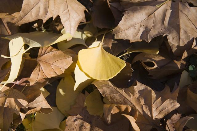 365.95 Leaves