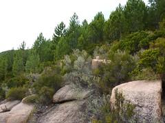 Canyon du Niffru : la traversée vers le bois de pins après l'embranchement douteux