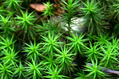 Studies in moss VII