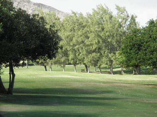 Hawaii Kai Golf Course 115