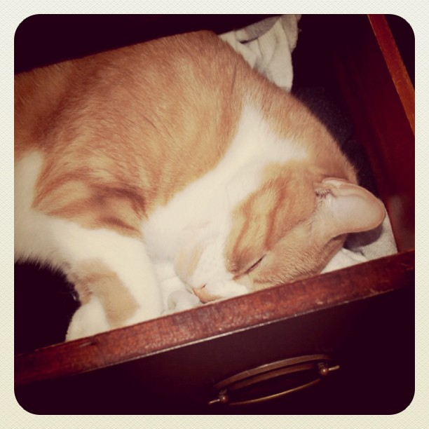 Curled up in Ryan's drawer