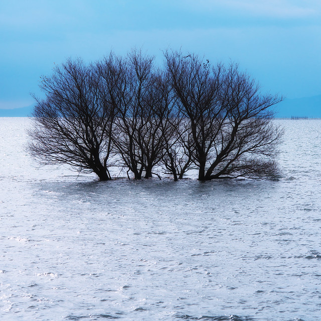 a Tree on Lake Biwa ( Happy New Year ) *