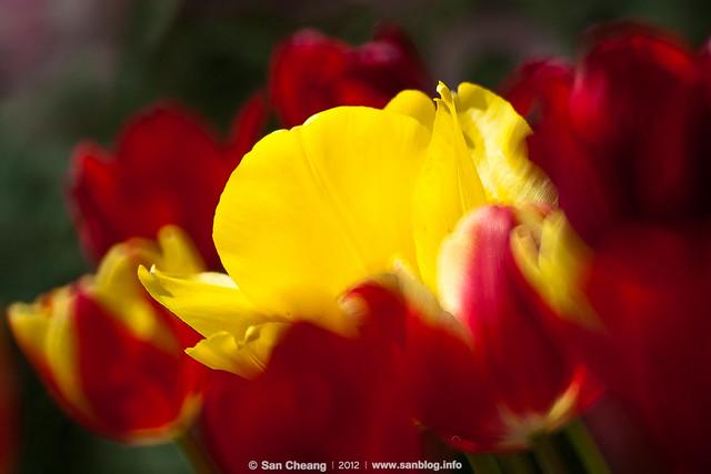 flora-2175
