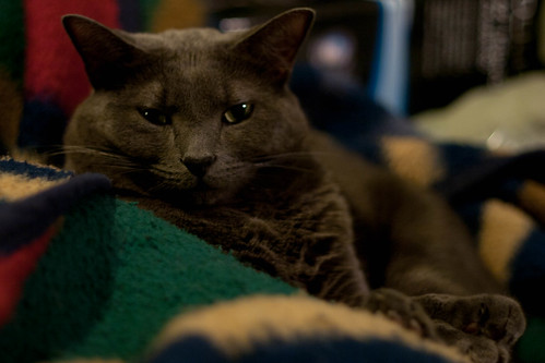 20120101-Cat Glaring from Blanket