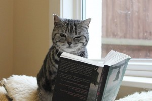 gray cat reading a book