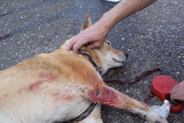 Dog Suddenly Biting Owner