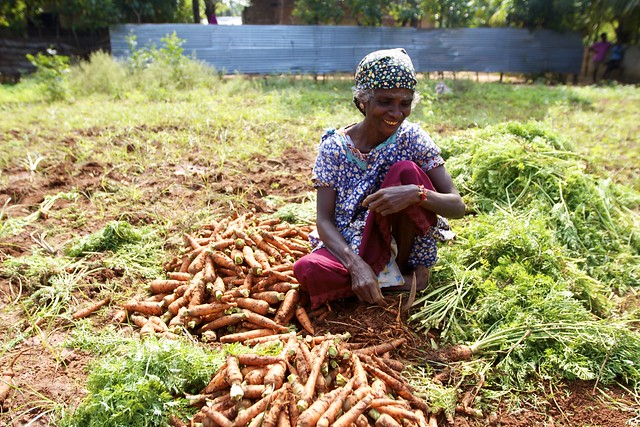Small-scale carrot farming in Jaffna