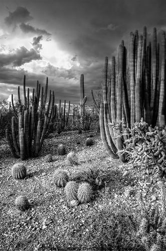 sunset arizona storm clouds botanical nikon desert blackwhitephotos tomlussier
