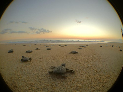 sunshine_turtles
