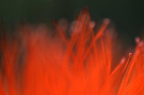 Flower (Macro Photography)