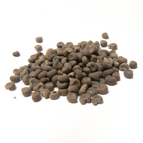 Ambrette Seed (Abelmoschus moschatos)