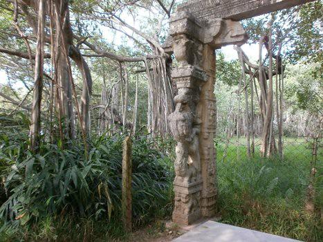 Adyar-banyan-tree-2