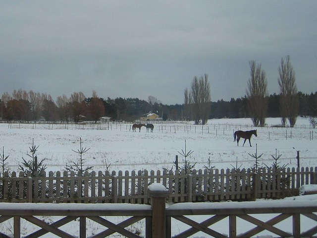 Viking Land, Horse, Winter 004
