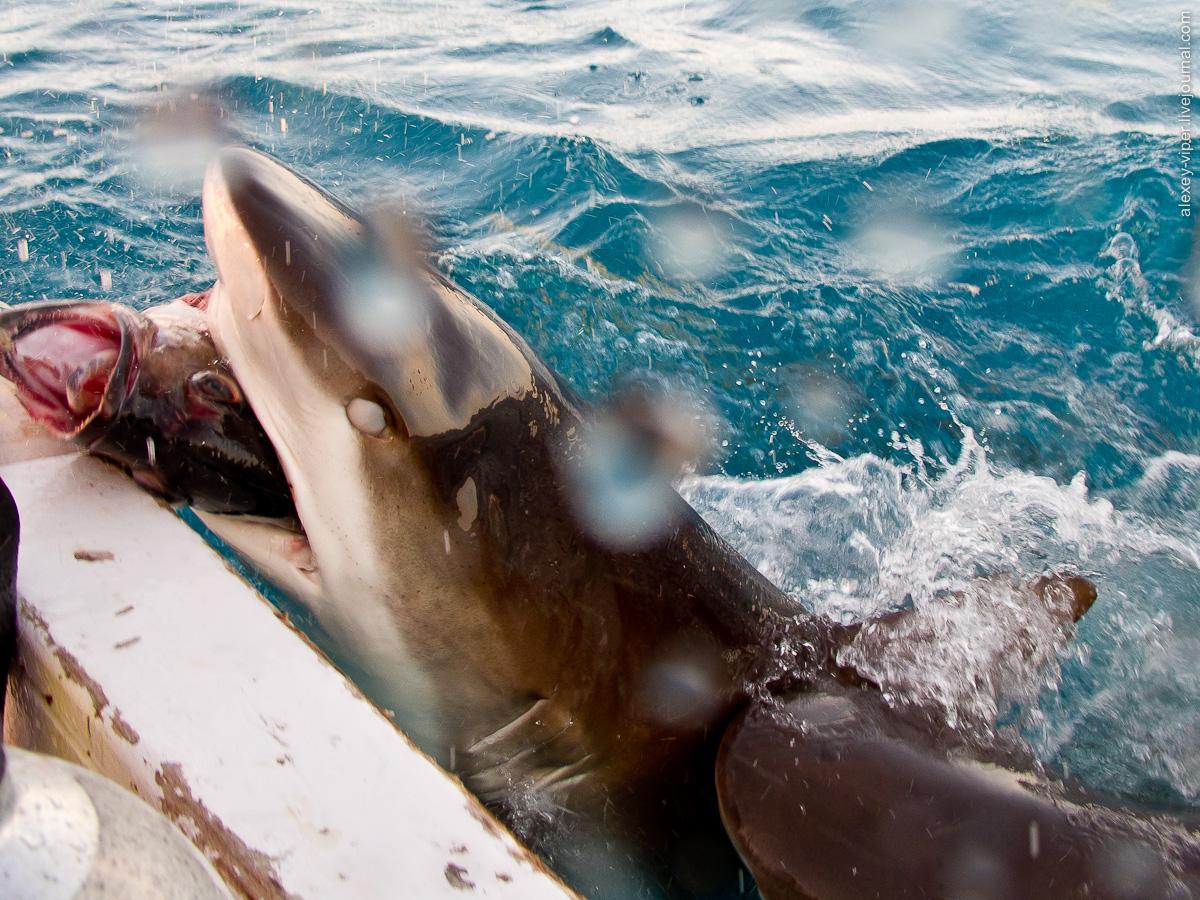 2012.01.12-2012.01.26_dive_safari_[cuba]-diving-023