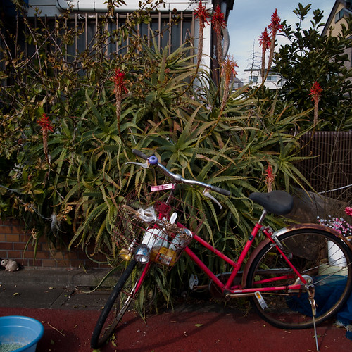 Wild Suburban Aloe, with Bicycle