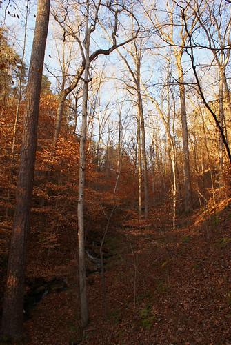 sunset sun tree leaves creek rocks stream alabama tuscaloosa lakeharris tuscaloosaalabama alalto