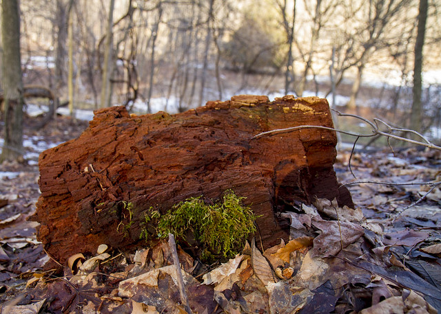Reddish Wood
