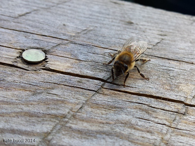 Bees like to pose for photos