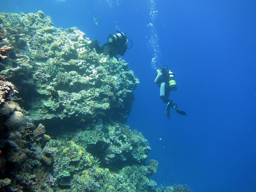 Diving around a coral bommie on the Great Barrier Reef