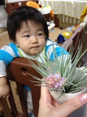 torako with Air_plants