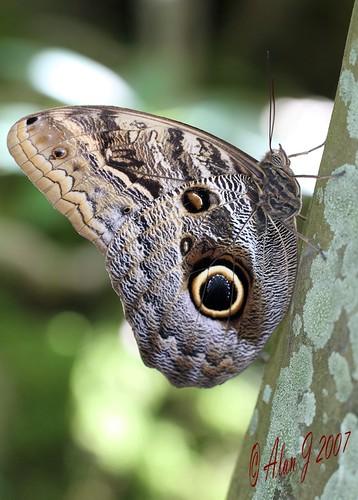 canon butterfly florida 7d 100mmmacrof28lisusm