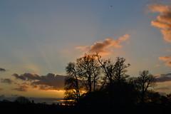 Sunset, Knole Park, Sevenoaks, Kent, UK