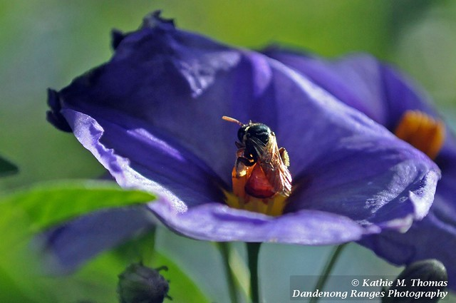 Insect in small purple flower